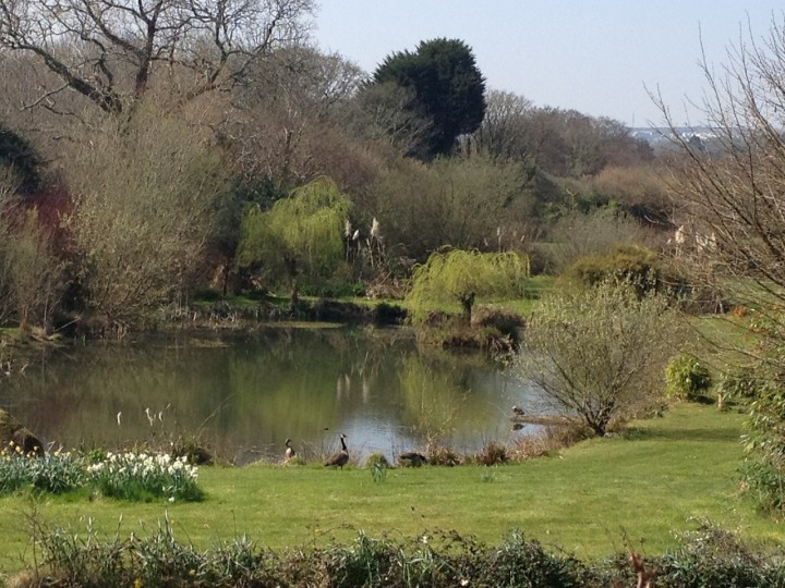 Grumpy's Pond - Great for wildlife watching